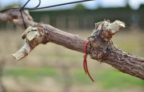 EM La lucha biológica en el viñedo